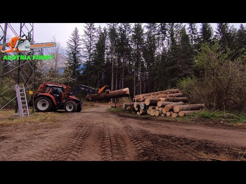 large-spruces-are-removed-from-a-power-line