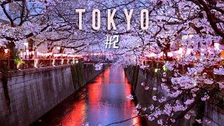 [도쿄 벚꽃 여행] 집순이 혼자 다녀온 도쿄 벚꽃 트립…