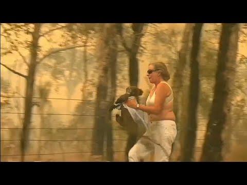 شاهد أسترالية تخاطر بحياتها لإنقاذ كوالا من النيران المشتعلة…  - نشر قبل 4 ساعة