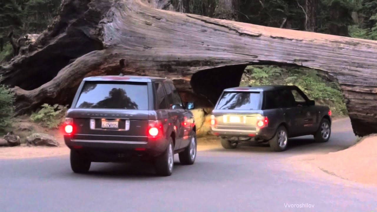 Sequoia National Park travel under the tree
