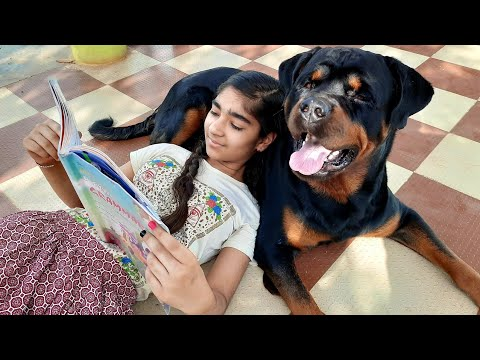 Fully trained rottweiler playing with me and my sister very aggressive|best family dog breed|