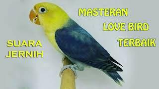 TERBAIK Masteran Burung LoveBird Suara Jernih Jawara Kicau
