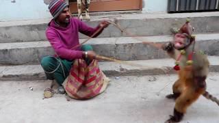 Bandar Aur Bakri Ka Khel   Funny Video Comedy   Video From My Phone   Bandar Ka Tamasha in Pakistan