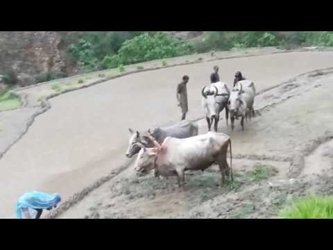 New Nepali Dauda Song  《 1 》Bhim Bahadur Saud 2073/2017