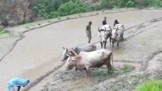 New Nepali Dauda Song  《 2 》Bhim Bahadur Saud 2073/2017