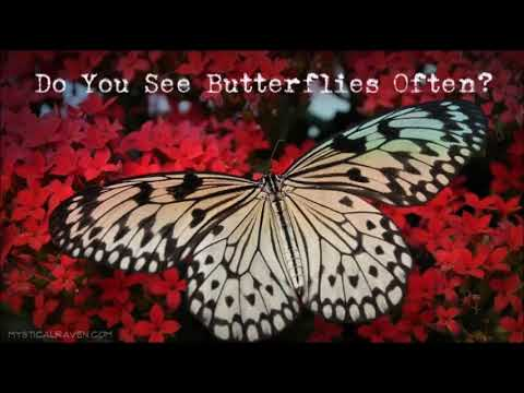 Butterflies Are Spiritual Messengers Heres What They Mean For You