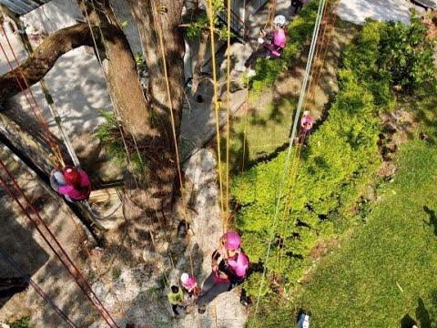 مخيم نسائي لتسلق الأشجار الشاهقة في تايوان  - نشر قبل 21 دقيقة