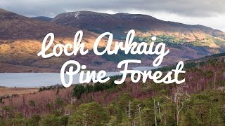 Help save the Loch Arkaig Pine Forest