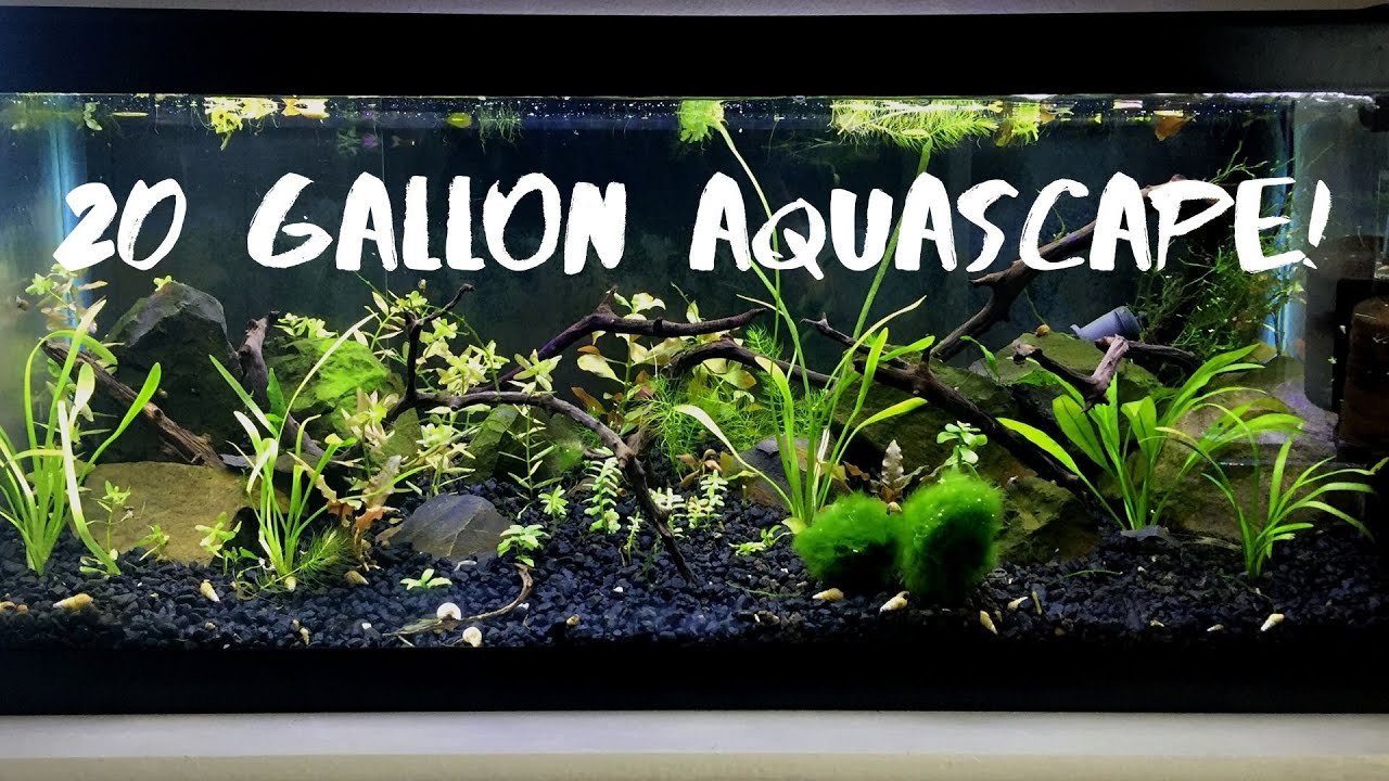 20 gallon aquascape! - YouTube