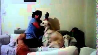 كلب يدافع عن طفله امه تضربه مش هتصدق
