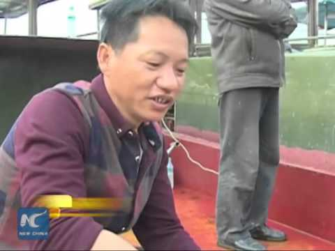 Massive Chinese sturgeon found in China's largestfreshwaterlake
