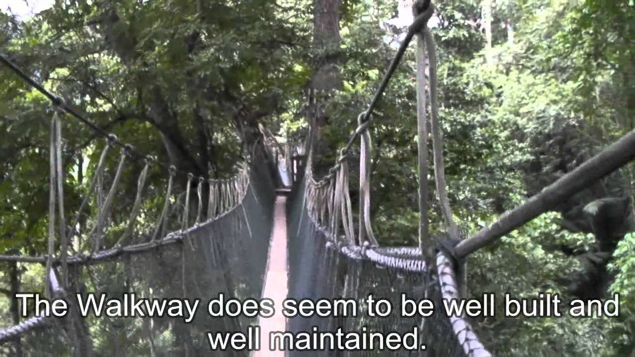 & FRIM Canopy Walkway KL - YouTube