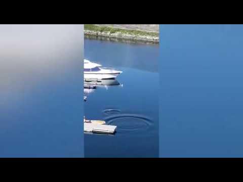 Los arroaces amenizan el confinamiento en Pontevedra