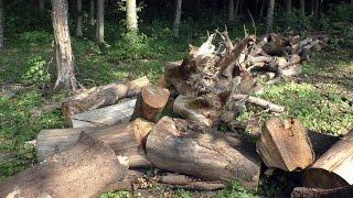 Відеорепортаж.  Хто кришує незаконну вирубку лісів на Вінниччині(, 2016-08-03T14:15:19.000Z)