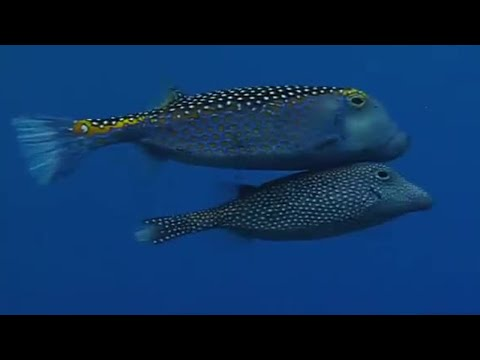 Underwater Mating | Battle Of The Sexes In The Animal World | BBC Earth | BBC
