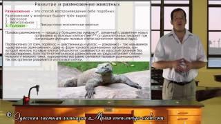 Развитие и размножение животных