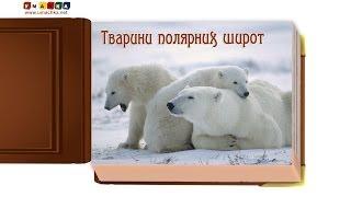 Відео для дітей від 1 року Презентація 'Тварини полярних широт'