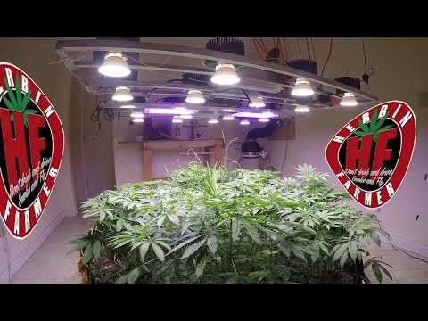 Indoor Organic Farming with LED Cycle 3 No Till 7