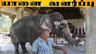 யானை பாகர்கள் மனித வாழ்க்கையை உண்மையாய் அனுபவிக்கிறார்கள் Incredible story about an elephant memory