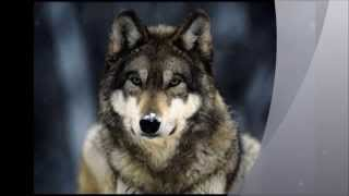Paulina Lenda -  Wolf Girl