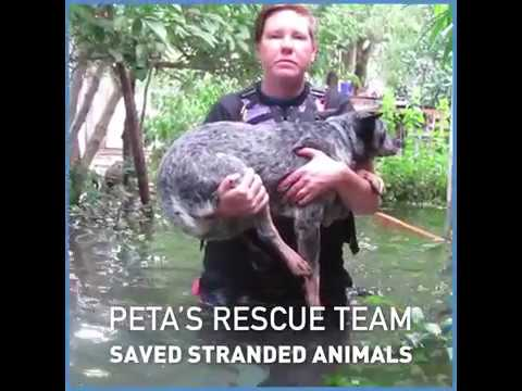 Stranded Animals Saved by PETA
