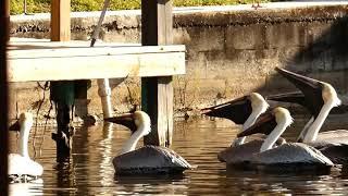 The Pelican Briefs trailer