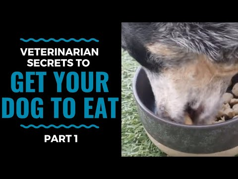 Veterinarian Secrets To Get Your Dog to Eat: Part 1 VLOG 68
