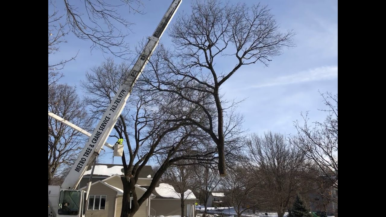 Blaine Tree Removal By Metro And Crane