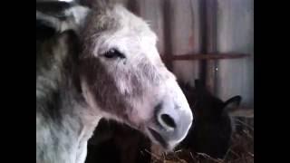 L'âne qui parle !!!