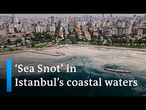 Turkey scrambles to stop slimy 'sea snot' in coastal waters | DW News