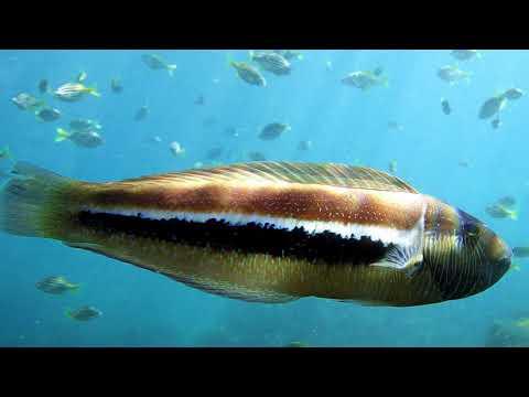 Sydney Marine Life