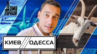 Дома лучше! Киев-Одесса: Белая Церковь, Бабины козы, Букский каньон, Умань смотреть онлайн в хорошем качестве - VIDEOOO