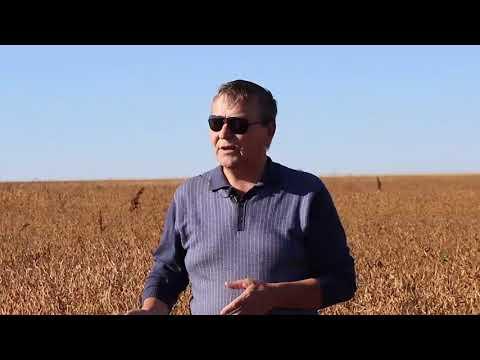 О системе защиты сои - Созончук С. М., исполнительный директор ООО «Амурская зерновая компания».