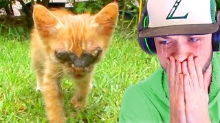 Blind Cat SEEING for the FIRST TIME! (Emotional)