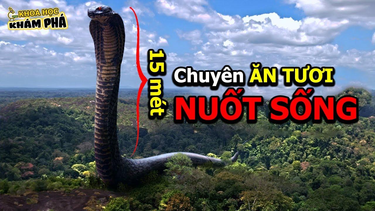 ⚡️ 7 Loài Trăn Lớn Nhất Từng Tồn Tại Trên Trái Đất Anaconda Chỉ Thuộc Hàng Cháu Chắt Tép Dịu