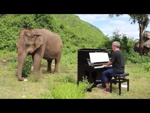 Bach On Piano For Blind Elephant Youtube