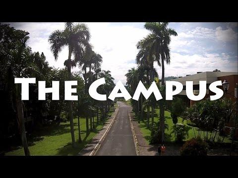 The Campus (UPLB)