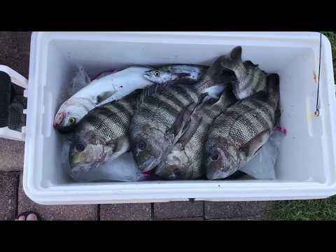 Light Tackle Fishing In The Indian River | St Lucie Inlet For Sheepshead, Mackerel And Bluefish