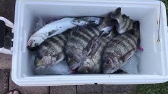 Light tackle fishing in the Indian River and St Lucie Inlet for Sheepshead, Blues, and Mackerel