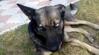Собака с красивыми глазами