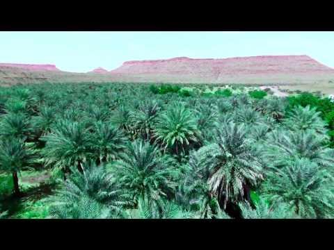 اجمل واحات النخيل في موريتانيا ..تصوير من الجو HD tourist in Mauritania