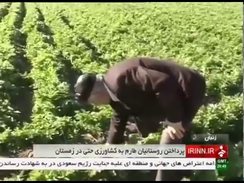 Iran Tarom county, Agriculture products in winter كشاورزي در زمستان شهرستان طارم ايران