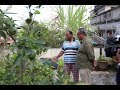 Rooftop Farming EPS 61