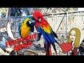 Free Flight Bird Sanctuary!