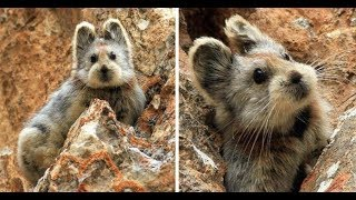 """Rare Animal Dubbed As The """"Magic Rabbit"""" Spotted For The First Time In 20 Years"""