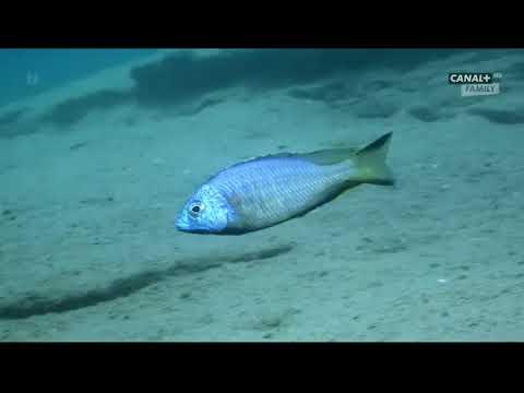 Podwodne Cuda Afryki odc.4 Malawi
