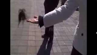 Самая умная Китайская птичка зарабатывает больше чем ты!