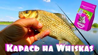Ловля карася на Whiskas фидером с убийца карася! Рыбе это нравится! Вискас против пенопласта!