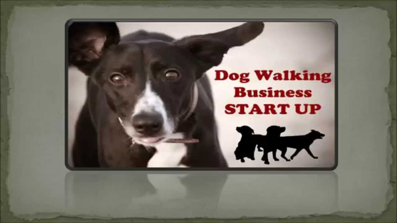 Dog Walking Business Enjoy Your Work And Start Own