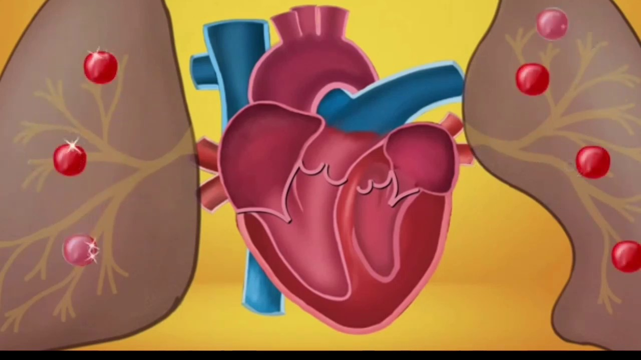 Human heart structure and working class 10th by physics ...